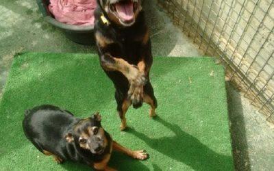 Luna and Bruno