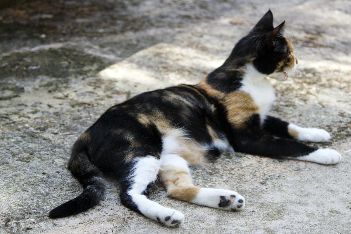 Katze_frei_5446