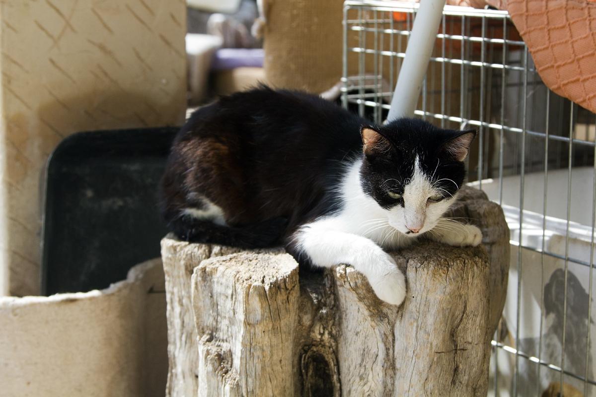 Katze_sw_5541