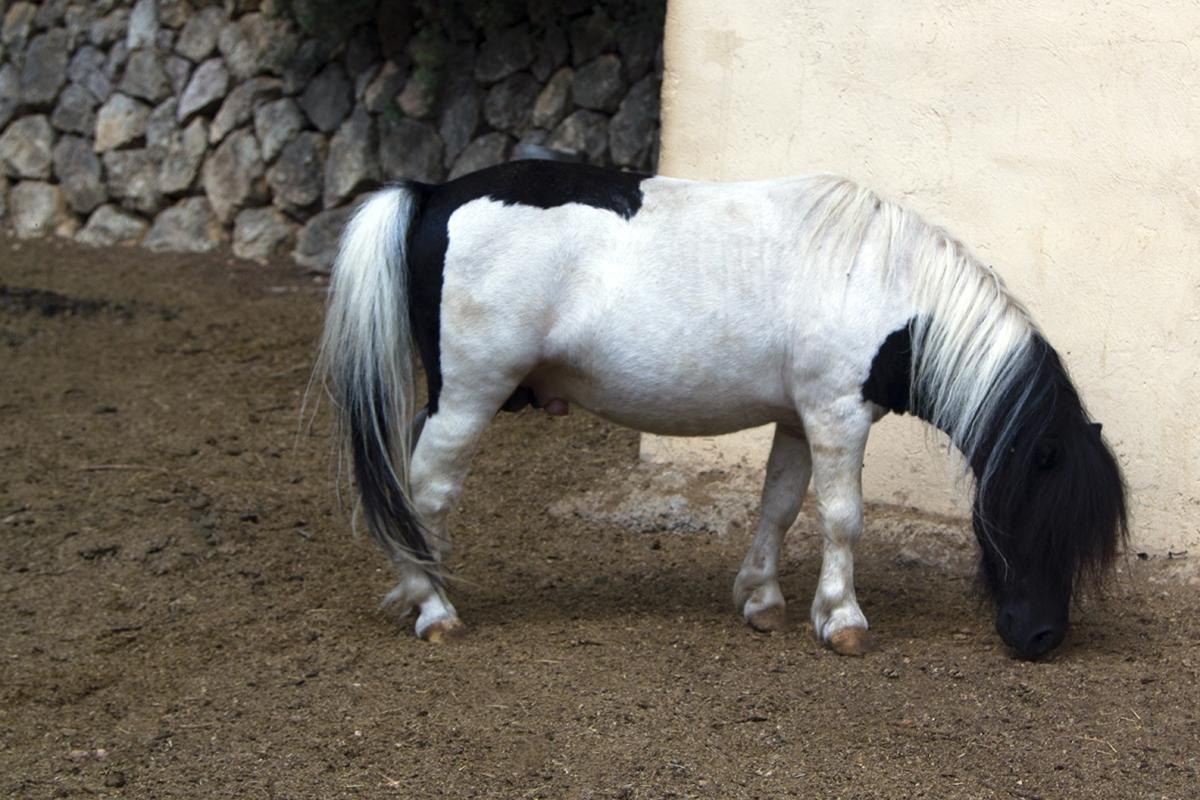 Pony Polly_5485