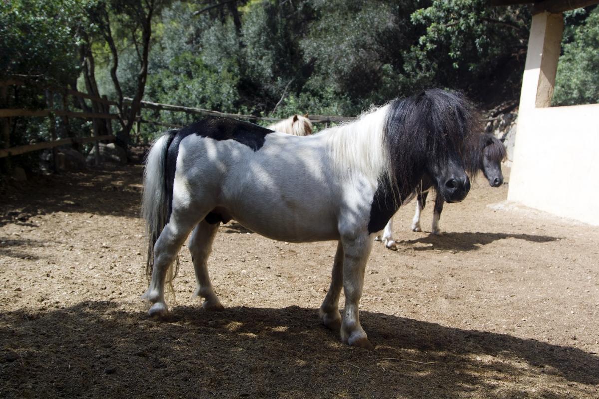 Pony_Polly_5481