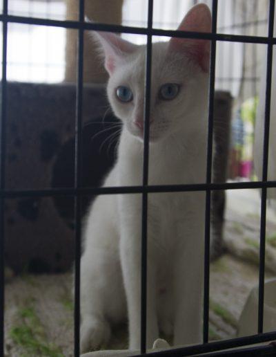 Katze_5417