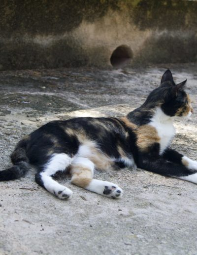 Katze_5448
