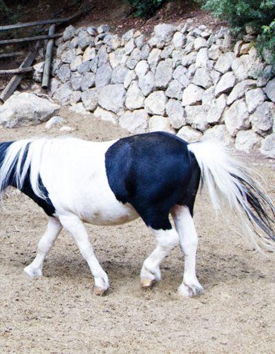 Pony_5489