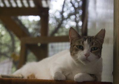 Cat_5567