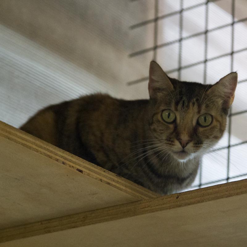 Katze_5575