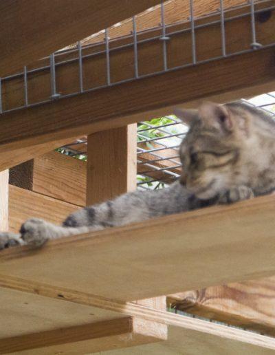 Katze_5662