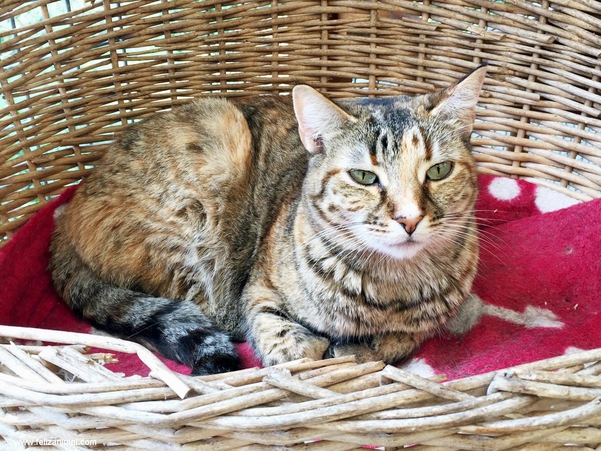 Cat no 3