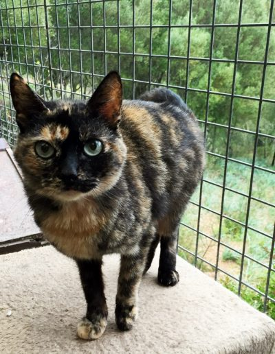 Cat no 1