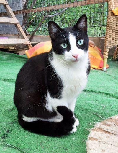 Gato no 2