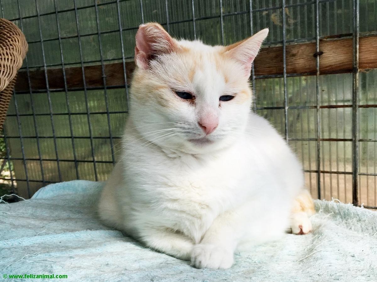 Cat no 11