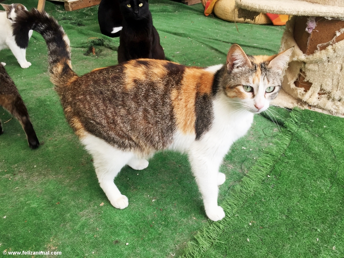 Cat no 10