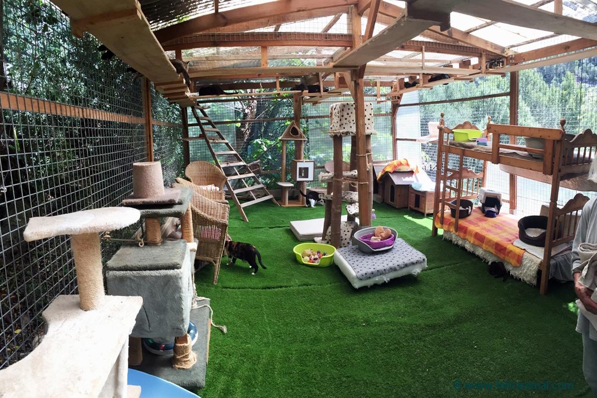Katzenhaus neuer Boden