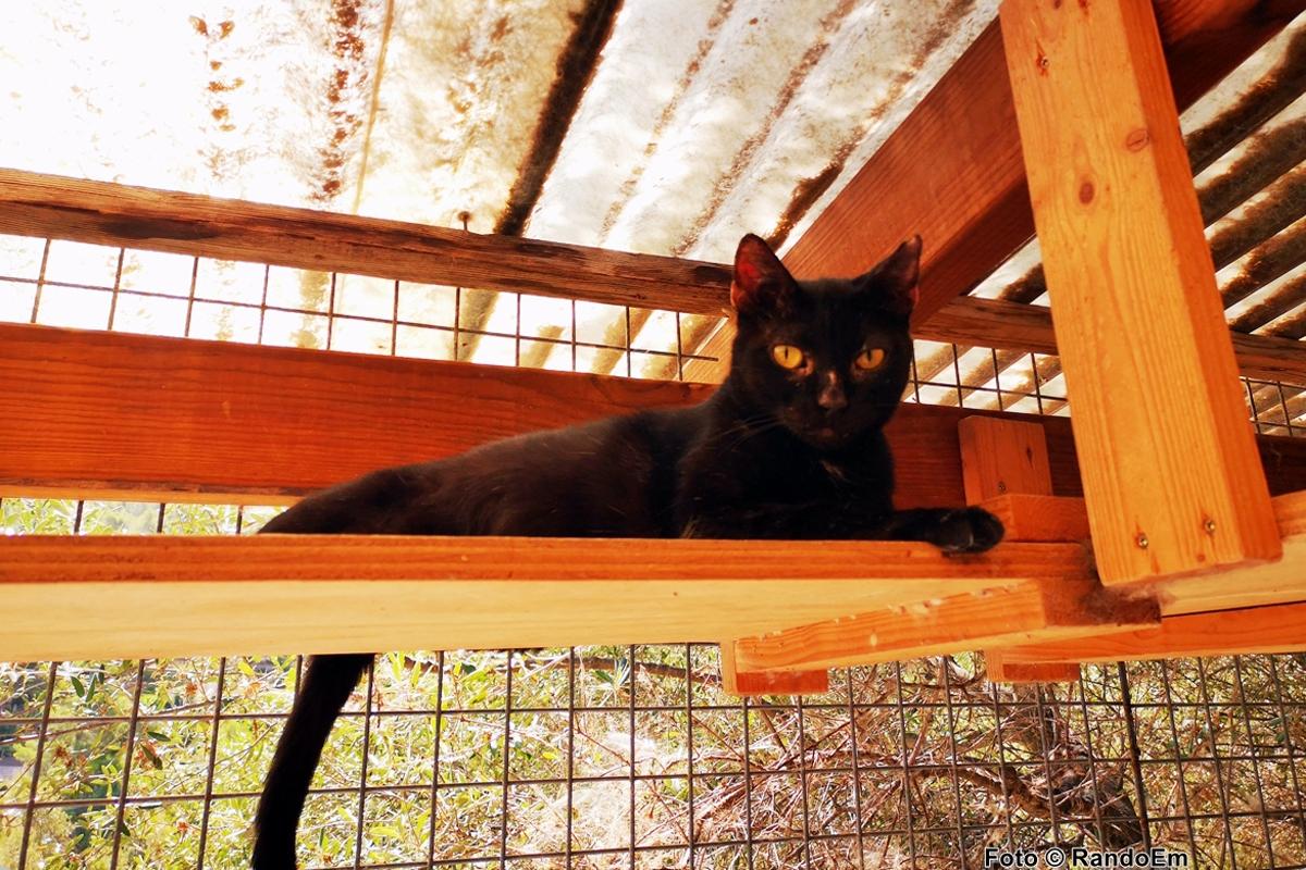 Cat no 5