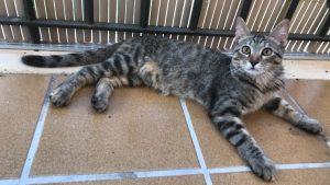 Katzen Madel 16082020
