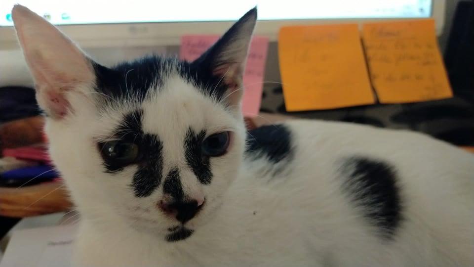 Katze_2008-2